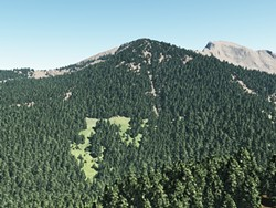 sierra_nevada_forests.jpg