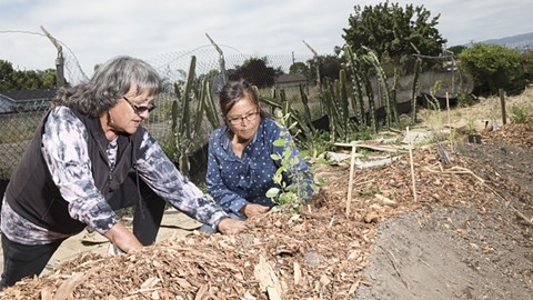 Diane Williams plants with Johnella LaRose at a miniature rendering of a traditional Ohlone dance arbor on 105th Avenue in Oakland. - PHOTO BY LORI EANES