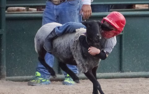 Mutton-busting has long been a featured event at Castro Valley's Rowell Ranch Rodeo. - WIKIMEDIA COMMONS