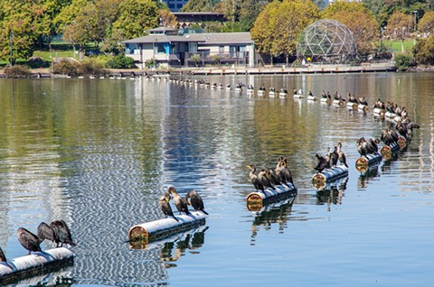 The warmer weather has attracting larger numbers of people to local parks and meeting areas like Lake Merritt. - JOHN KIRKMIRE