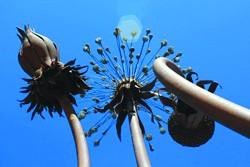 Public sculptures in uptown Oakland