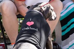 oakland_animals.jpeg