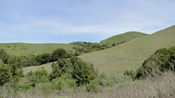 Wildcat Canyon Regional Park.