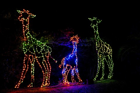 ZooLights brings sparkling LEDs to facilities throughout the Oakland Zoo. - STEVE GOODALL