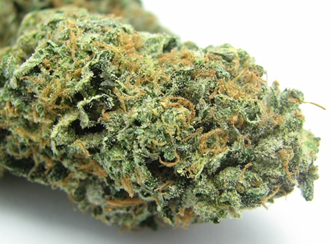 Sunset Sherbet medical cannabis strain. - DAVID DOWNS