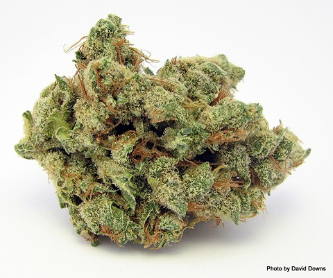 """Dutch Crunch"" medical marijuana - DAVID DOWNS"