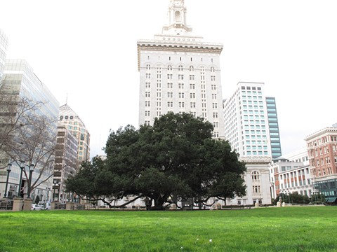 2017 marked the 100-year anniversary of the Jack London Oak's installation out front of City Hall.