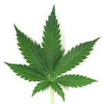 Dear Oakland Leaders Who Want to Get Into the Weed Biz: Why Stop at Marijuana?