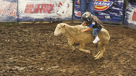Mutton busting is great fun for spectators, but not necessarily kids or sheep.