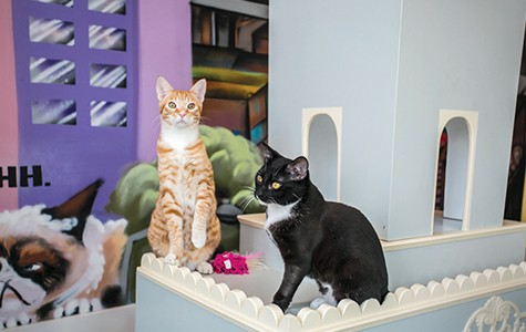 Cat Town Cafe only allows gift adoptions if the cat gets to have a meet-and greet with its future owner.