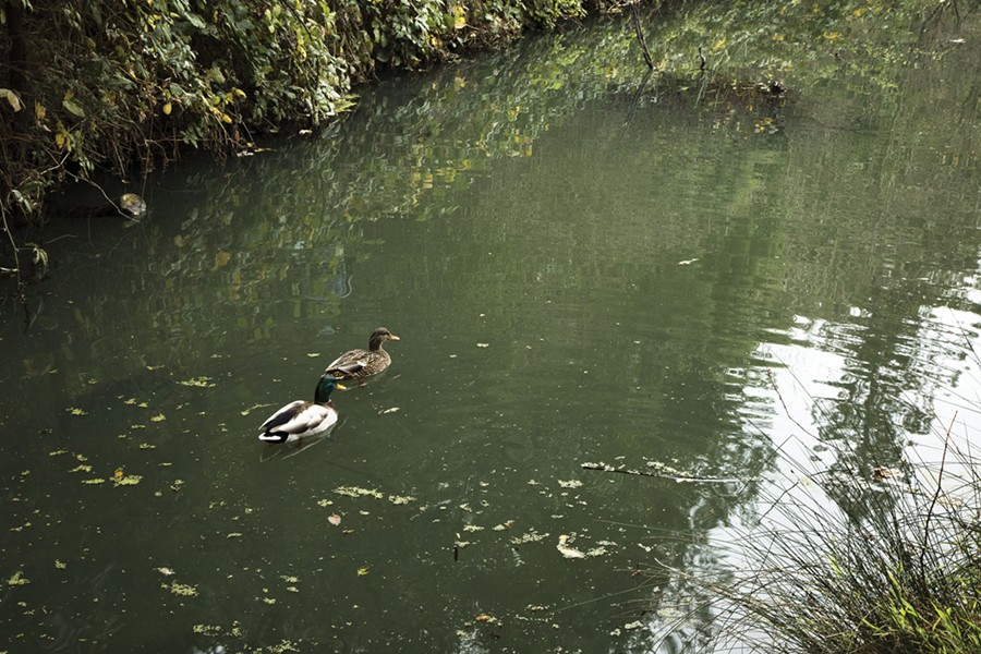 Nearly 19,000 gallons of sewage have spilled into Temescal Creek this year. - PHOTO BY GABRIELLE CANON