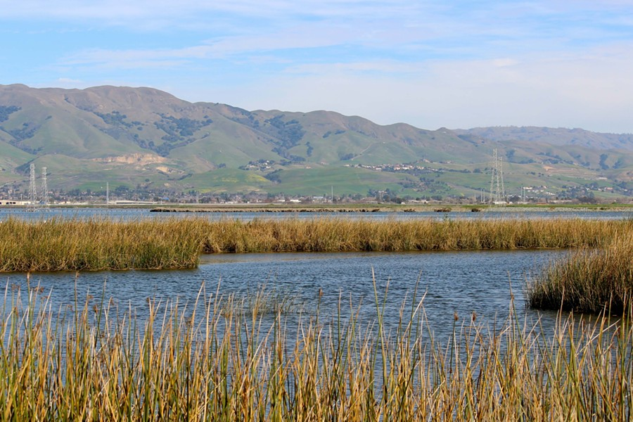The Bay Conservation and Development Commission made its decision this week to fill some shallow portions of the bay. - SAVE THE BAY