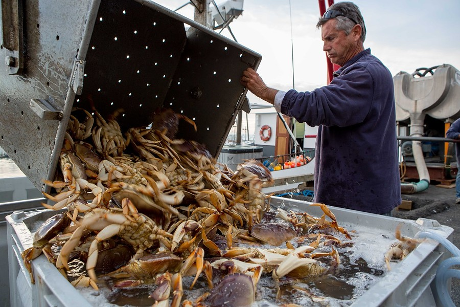 Dungeness crab. - BERT JOHNSON/FILE PHOTO.