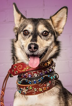 Wiley the office dog models Best Canine Bling (Paco Collars) and Best Way to Spay (East Bay SPCA).