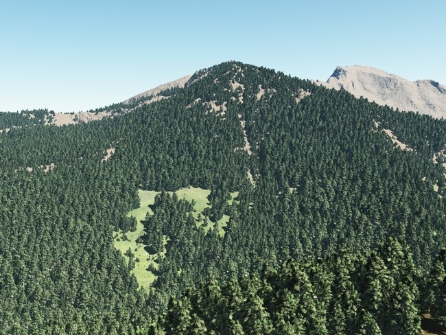 sierra_nevada_forests.jpg