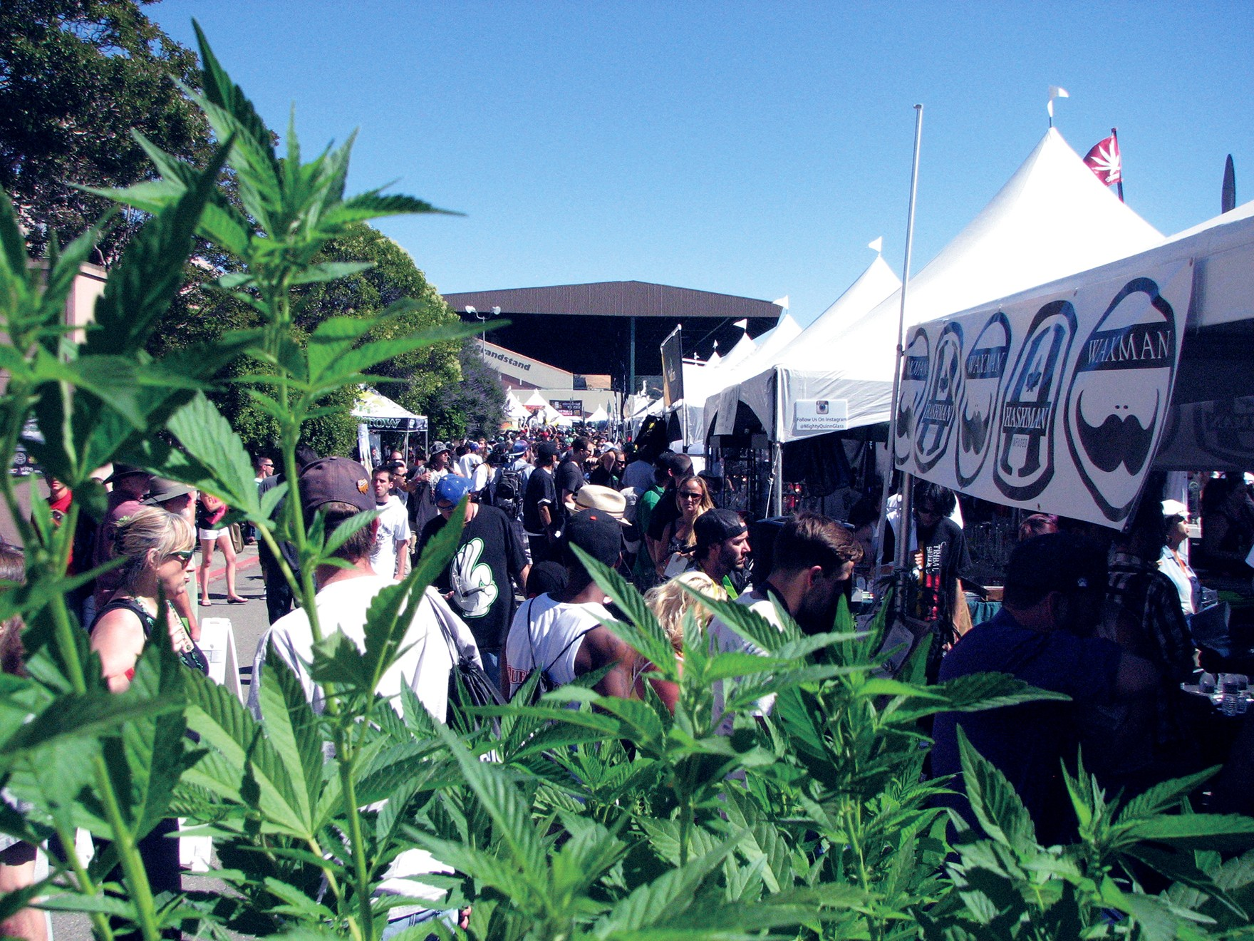 How to Have an Epic Cannabis Summer | Summer Guide | Oakland