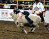 Mutton Busting contests are featured at the annual Rowell Ranch Rodeo in Castro Valley and similar to bullriding, but instead with young children and sheep.