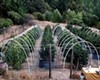 A Northern California marijuana garden