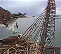 A Riveting Osprey Cam Has Hatched a Flourishing Human Community