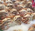 Crab Lawsuit Will Minimize Whale Endangerment