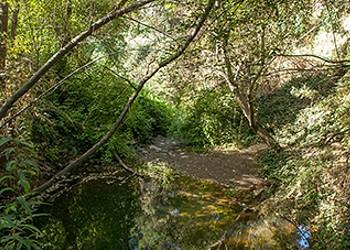 Sausal Creek: An Oakland Watershed Reborn