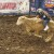 Alameda County Supervisors to Reconsider Banning Some Rodeo Events