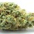 The Best Marijuana Strains of Summer 2015