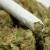 Canada May Fully Legalize Marijuana by Spring 2017