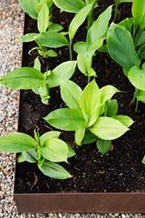41641ea2_homestead_garden_photo_smaller.jpg