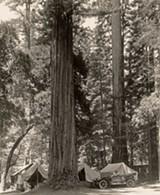 Camping at Big Basin Redwoods State Park. Photo: H.C. Tibbits, 1920s. Save the Redwoods League photograph collection. Courtesy of The Bancroft Library, University of California, Berkeley.