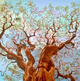 "Fernando Reyes, Manzanita Magnificent (2020), oil on canvas, 48"" x 48"" - Uploaded by Mercury20"