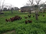 Sol Seeker Farm.