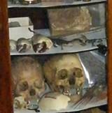 26eb06be_skulls.jpg