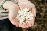 ffb53424_tung-flowers-468005_1280.jpg