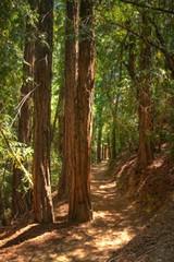 2f050548_redwoods.jpg