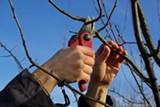 e1c11fe8_pruning_fruittreepruning_pic.jpg