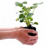 0fad2fe5_plant_gift.jpg
