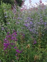 8b43189c_native_gardening.png
