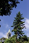 UC Berkeley has lots of trees ...