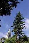 UC Berkeley has lots of trees ...