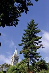 JARED GRUENWALD - UC Berkeley has lots of trees ...