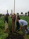 Urban Farmers at Occupy the Farm