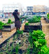 Watering the vegetable garden at Afrika Town.
