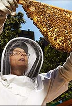 What's Poisoning the Bees