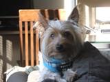 Zion, a Piedmont Pet Mayor finalist.