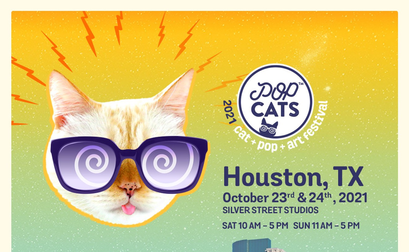 POP Cats: art, cats, pop festival