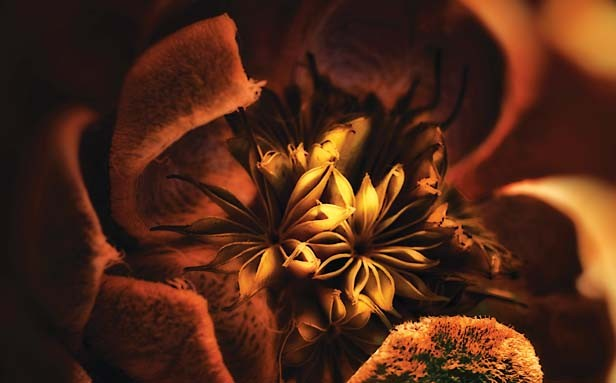 """Third place, Adam Smith, Springfield. """"Ambient Intimacy"""" is all about shadows, available lighting and angles. Smith adds, """"The flower symbolizes beauty and lighting symbolizes intimacy."""""""