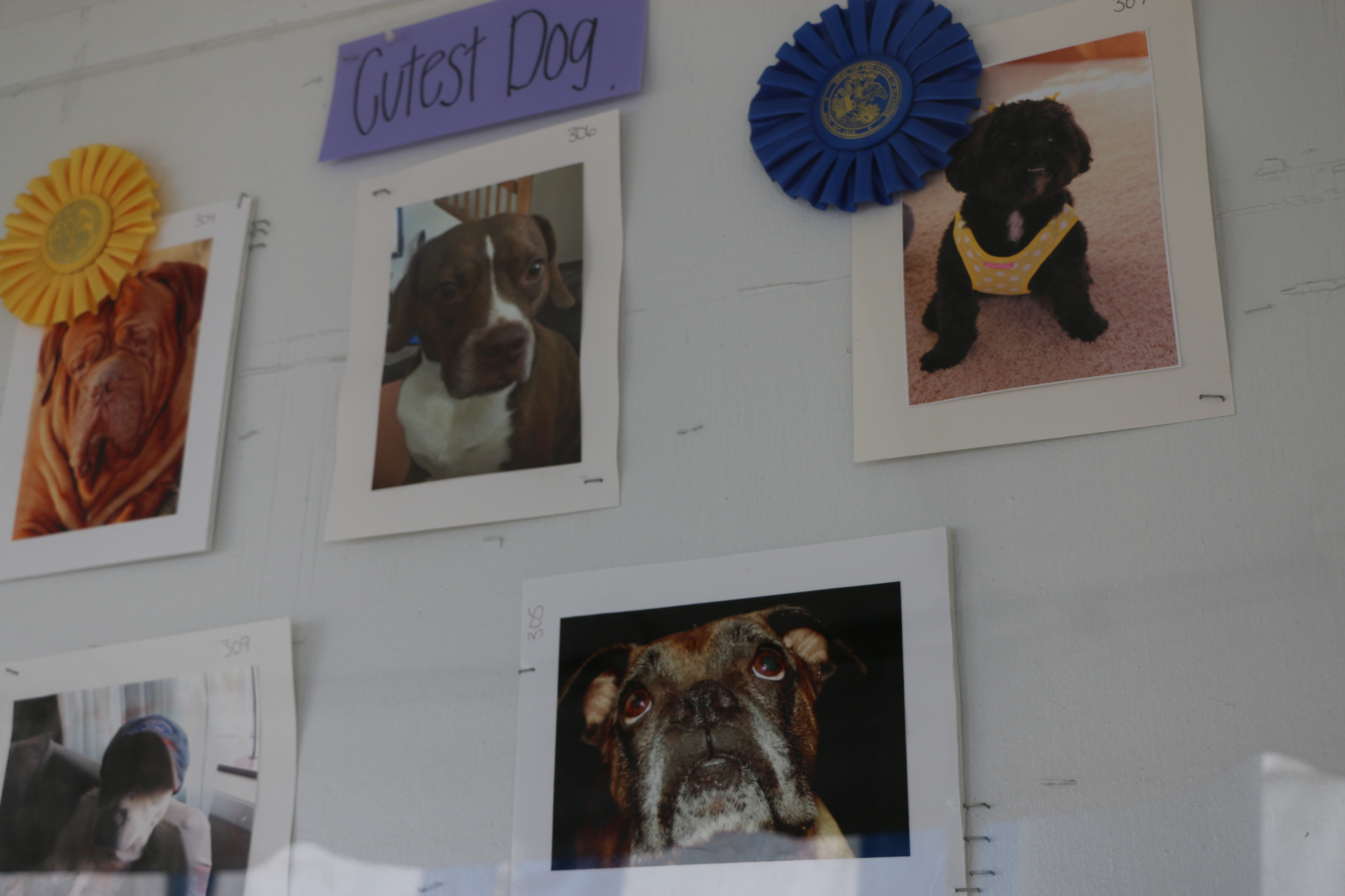 OK ... that's it folks!!!! BUT wait here's two last pics from the 2014 Illinois State Fair. This is a pic of some of the dog contest entries and winners. - ANITA STIENSTRA