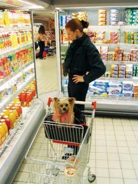 "Amy with her dog, Lucy, at a  grocery in Paris, where dogs are allowed  in stores. About this photo she wrote on  her blog: ""Before anybody starts mewling about how awful it is that she's in the  grocery store, note that sheâ? - PHOTO BY GREGG SUTTER"
