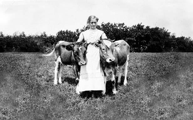 Pioneer woman tending to two cows.